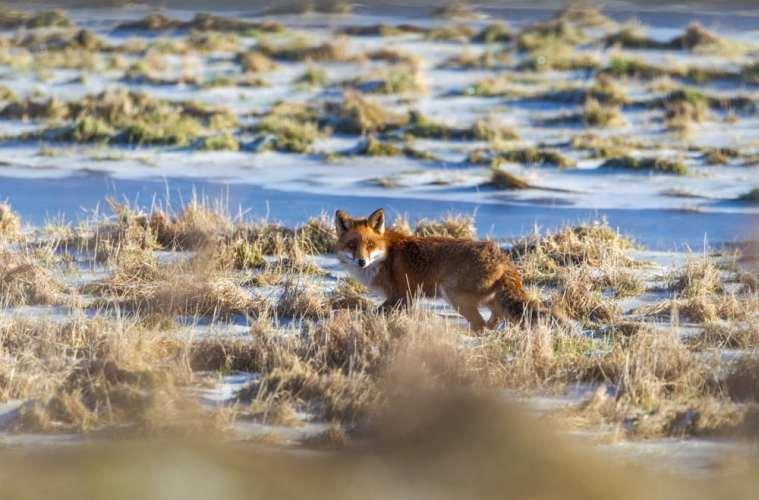 fox-EP9F6064-2
