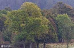 Kend dine vildtplanter: Bøg