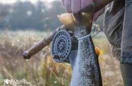 Lystfiskeri og fisketegn i Danmark