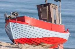 Uenighed i EU om stop for ålefiskeriet