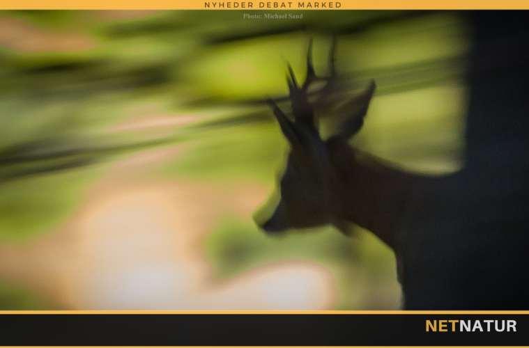 Jagtfilm om bukkejagt