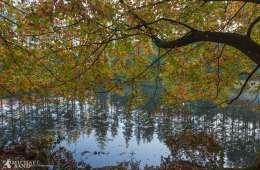 Gribskov er blevet mere våd