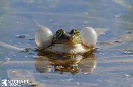 Viden om: Hvordan bevares biodiversiteten?