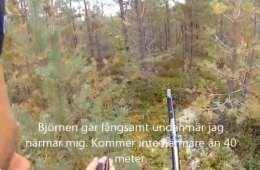 Bjørn på 210 kg nedlægges - VIDEO