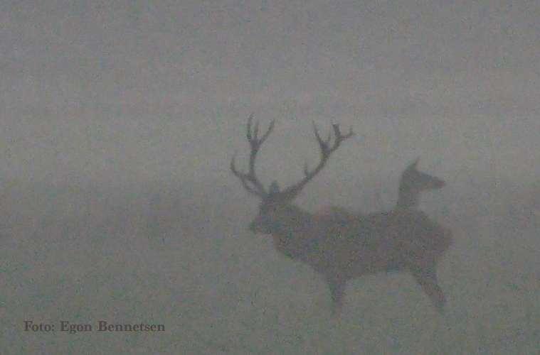 DNH`s hjorteplan- det faglige grundlag (b)