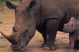 White Rhino 8.7.2012 Hero And Circleb HI 58736