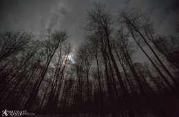 Må natsigte anvendes til videooptagelse om dagen