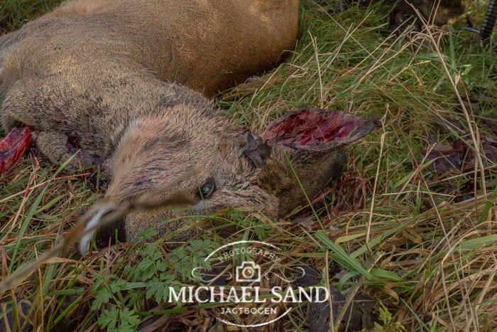 Nedlagt dyr var allerede påskudt med pil
