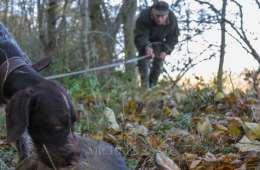 De danske schweisshundeførere er rustet til eftersøgning af ulv