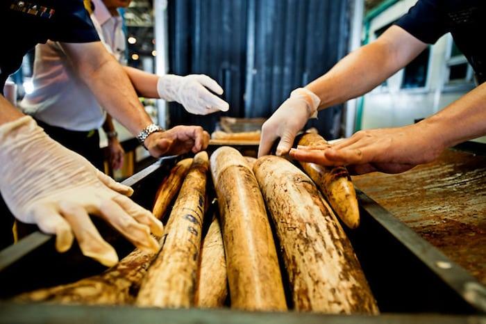 CITES opfordrer nu til sanktioner