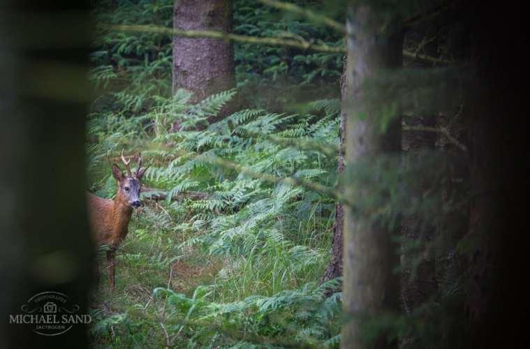DLS argumenterer for jagt- og ejendomsret samt mere sikker skydning
