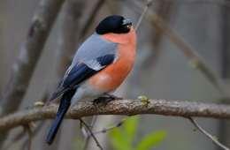 Byg selv redekasser til fuglene