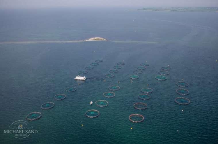 EU efterlyser mere fakta om havbrug