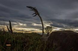 Hjortevildt trues af smitsom og dødelig sygdom