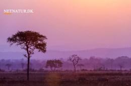Generationsskifte hos Diana Jagtrejser & Limpopo Travel