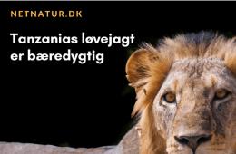 Tanzanias jagtindustri roses af EU-delegation