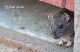 Rottegift: Farlige stoffer for mennesker tillades fortsat