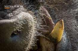Argentina: Vildsvin og buejagt for drømmere