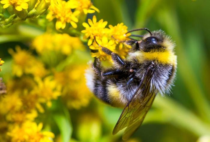 Sådan kan du hjælpe de betrængte bier