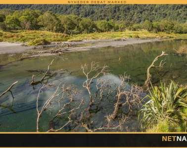 Fluefiskeri i New Zealands drømmevand