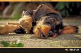 Fyrværkeri og hunde - hvordan kan man forebygge?