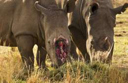 Højere straf til dyrekriminalitet på finansloven
