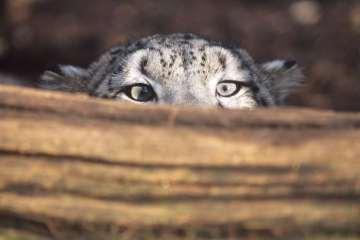 Stadigt stigende temperaturer kan udslette mange dyrearter