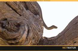 Slangebid og hvad så?