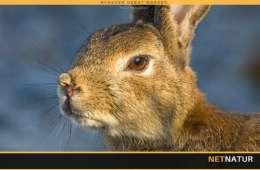Kaninjagt med 3,5 millioner visninger