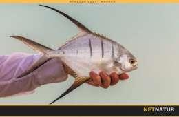 Cuba og fluefiskeri