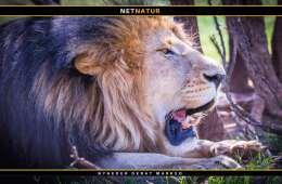Løveslagtning vækker forargelse
