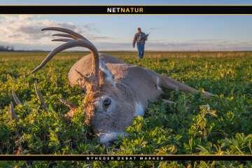 Antallet af jægere falder i USA
