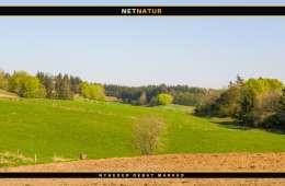 Eksperter: Flere danske majs- og kornmarker skal omlægges til græsmarker