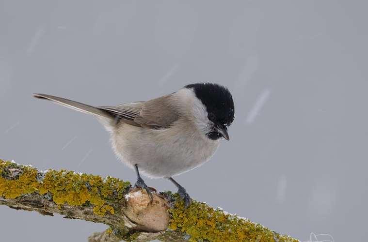 Mange fugle sulter i tørken, mens andre klarer det fint