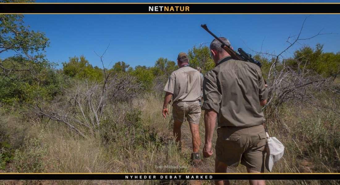 Udsendelse påpeger at Afrikas vilde dyreliv afhænger af indtæger fra jagt