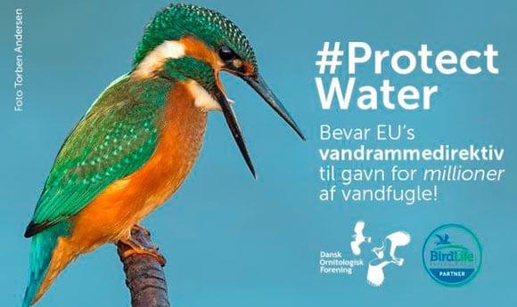 100 miljøorganisationer bag ny kampagne for vand