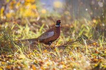 Bregentved tilbyder udlejning af arealer til jagtkonsortier