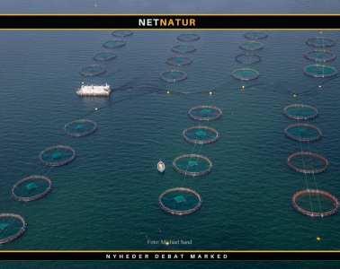 Minister kræver fuldstændigt overblik over havbrugsområdet