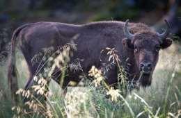 Mere plads til Bornholms bisoner