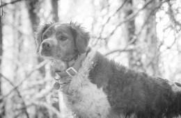 På jagt med stående hund i Oregon
