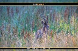 Naturstyrelsen udlejer jagt i Oksbøl skov