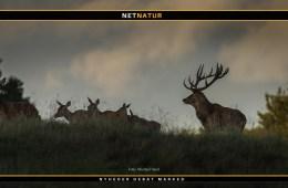 Jagt i Alperne