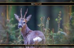 Jagten i Vinderup Skov udlejes