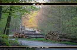 Uetisk med træfældning i yngletiden