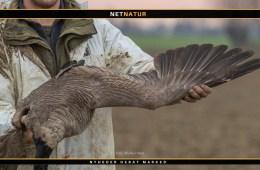 10.556 vinger fra nedlagt fuglevildt