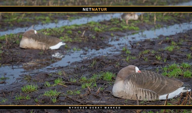 Jæger lægger afstand til HB'ere og vil hellere repræsenteres af ornitologer og Danmarks Naturfedningsforening