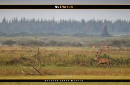 Jagt udlejes ved Blåvandshuk