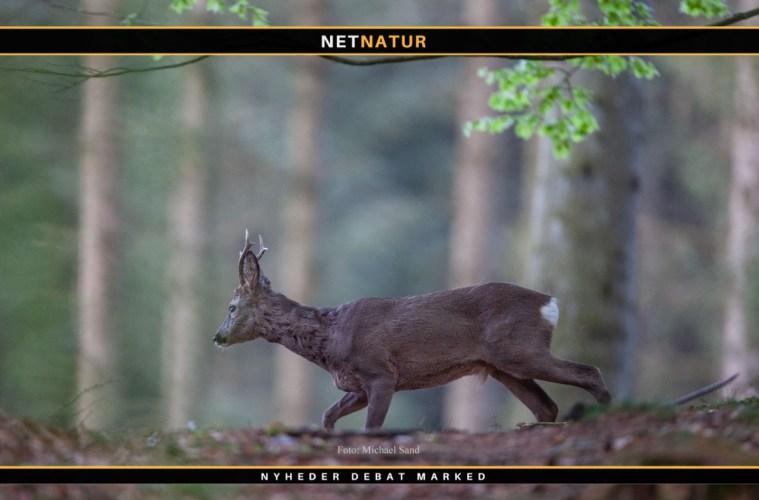 Jagt udbydes i Trekantsområdet