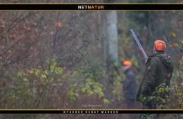 Stemmeret og jagt