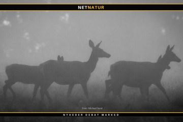 Vildsvinehegn og skader på vildt